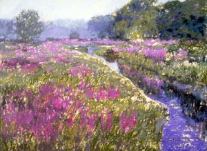 "Morning Lythrum pastel 27"" x 33"" [345.]"
